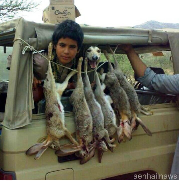 صيد الارانب …. ما تعليقك