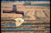 المملكة توقف شراء القمح والشعير من كندا