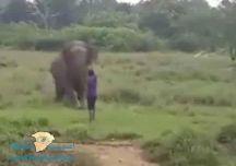 """(من يقول للفيل إني عنتر ) بالفيديو: شاهد """"فيل"""" ضخم يدهس شخص حتى الموت"""