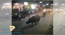 حقيقة ظهور حيوان وحيد القرن في شوراع #القاهرة