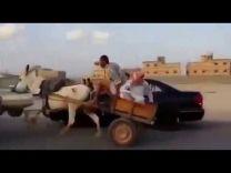 بالفيديو: مواطن علق عليه مثبت السرعة وهو يقود حمار