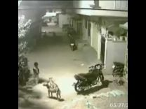 """بالفيديو:شاهد شجاعة """"طفل"""" قابل هجوم شرس لمجموعة من الكلاب !"""