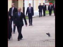 """بالفيديو: حمامة تلقي التحية العسكرية للرئيس الروسي """"بوتين"""""""