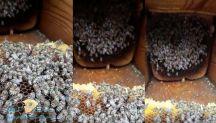 بالفيديو… لأول مرة النحل يموت في المناحل من شدة البرودة