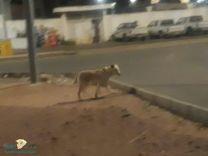 كلاب ضاله تتجول بشوارع الاحياء بالقاعد