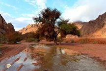 شهدت منطقة حائل اليوم (الجمعة) هطول أمطار غزيرة