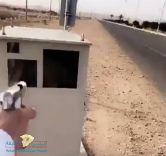 """""""شرطة مكة"""" تطيح بمطلق النار على """"ساهر"""" بطريق الطائف – الباحة"""