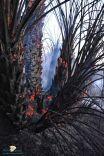 مدني حائل يخمد حريقا اشتعل بمزرعة تحوي مجموعة مختلفة من المزروعات وأشجار النخل بحي السويفلة .