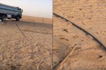 بالفيديو: مشهد إنساني لمواطن يسقى ظمأ جربوع كاد يموت عطشًا في الصحراء