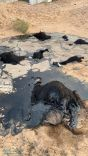 """الدفاع المدني بـ #تربة يعمل على إخراج قطيع من الماشية بمادة """" القار """" في منطقة صحراوية"""