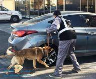 """لعودة آمنة.. """"الجمارك"""" تعلن نجاح تجربة الكلاب البوليسية في الكشف عن مصابي كورونا بدقة عالية"""