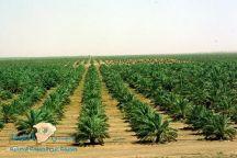 السعودية تسعى لزراعة 10 مليارات شجرة